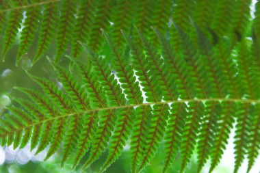 Close-up shot of beautiful fern leaves for background stock vector