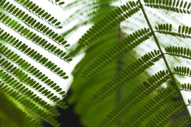 Close-up shot of beautiful fern leaves on blurred natural background stock vector