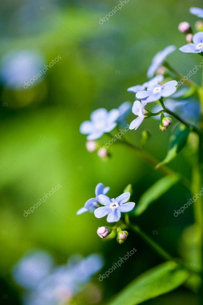 close-up shot of beautiful little purple flowers on natural background