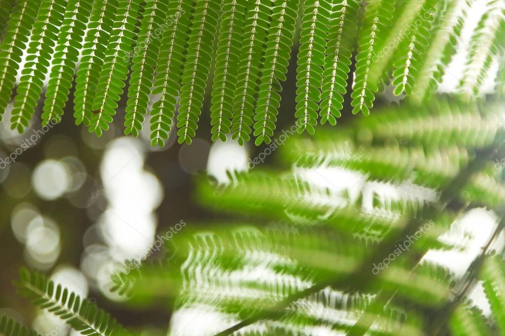 close-up shot of green fern leaves for background