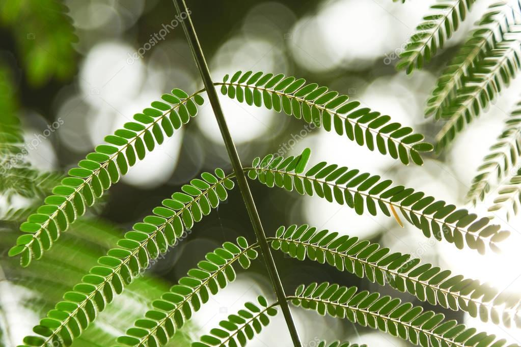 close-up shot of beautiful fern leaves on blurred background