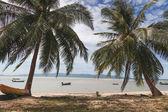 rybářské lodě, plovoucí ve vodě s palmami v popředí