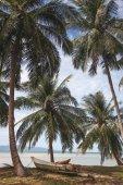 palmy na tropické pobřeží s lodí stojící na zemi