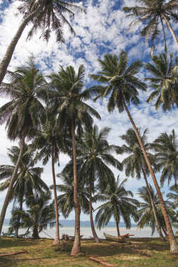 beautiful palm trees at tropical seashore on sunny day