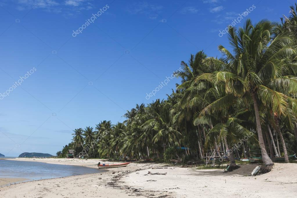 beautiful tropical beach with palm trees on sunny day