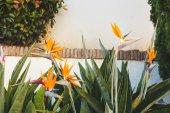 beautiful strelitzia flowers infront of white wall