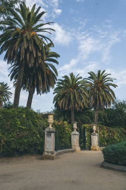 beautiful view of park with palms, spain