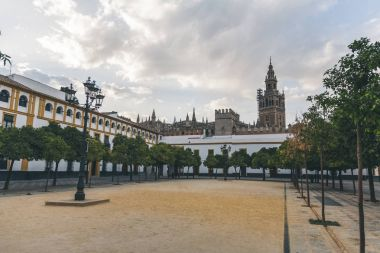 scenic view of city square with trees and Seville Cathedral, spain
