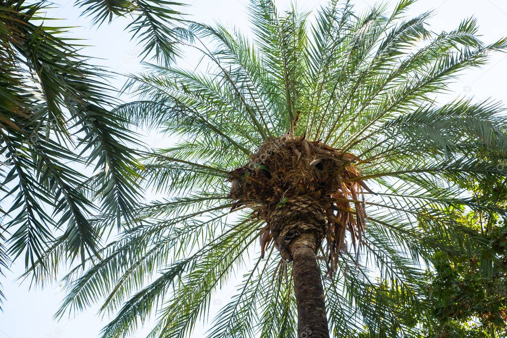 bottom view of palms under clear sky