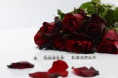 Valentines Day Concept, Red rose on white background.
