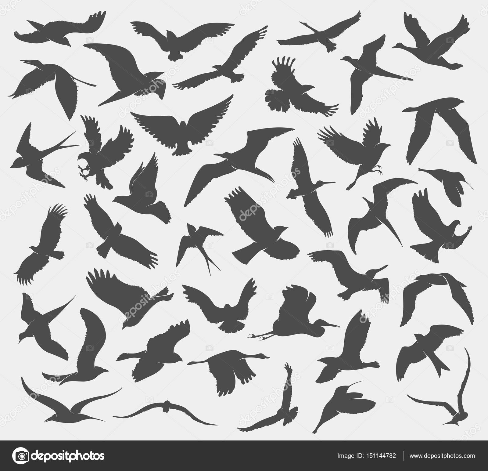 飛ぶ鳥のシルエットとパターン \u2014 ストックベクター