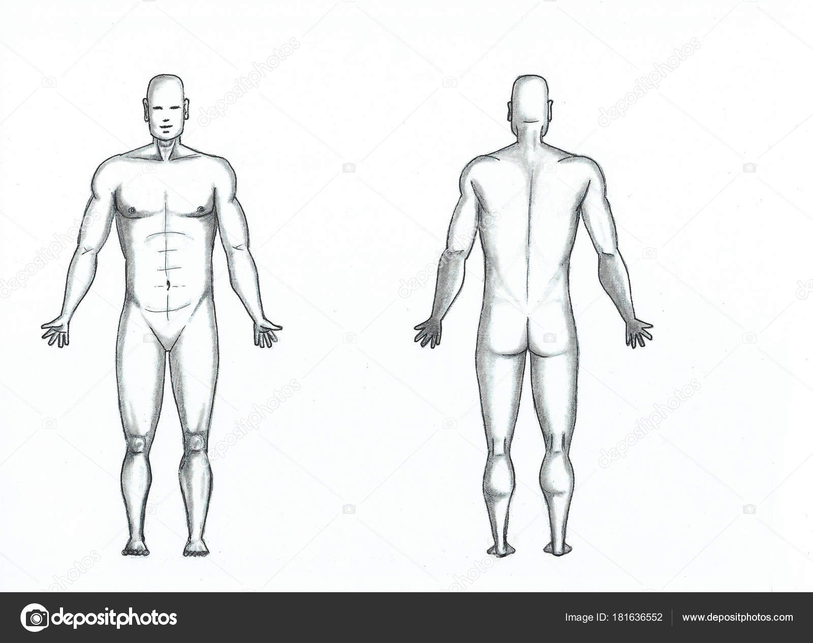 Illustrated Full Body Male Anatomy Stock Photo Universaltouch