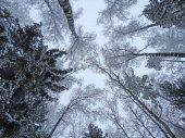 foresta di paesaggio di inverno in neve