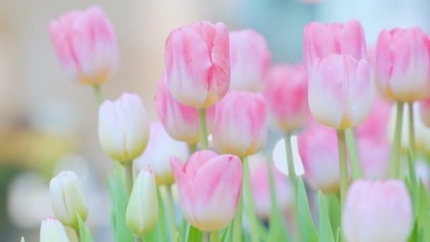 Tulipán virág Zöld levélháttérrel