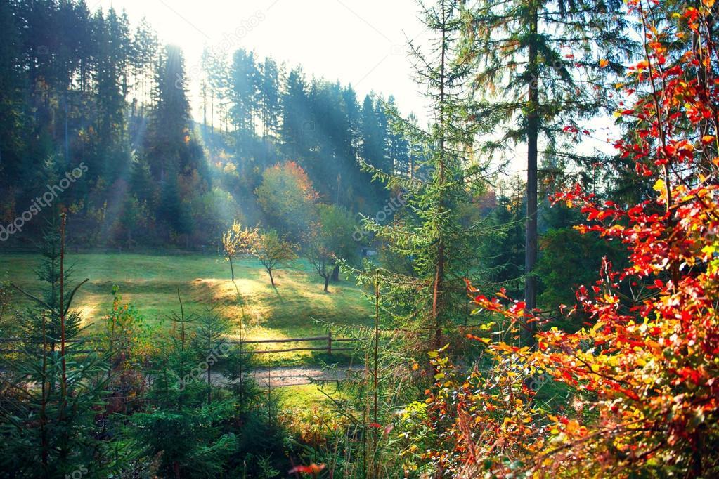 Фотообои Autumn nature scene.