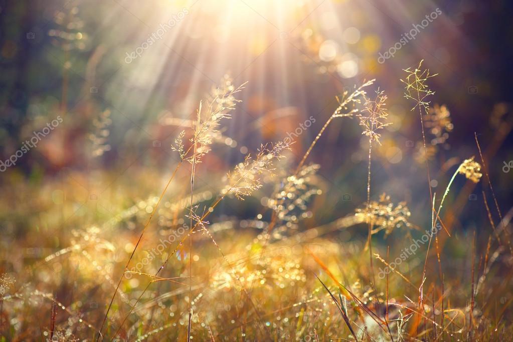 Фотообои Beautiful nature background.
