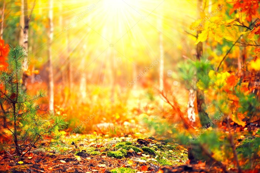Autumn sunny forest.