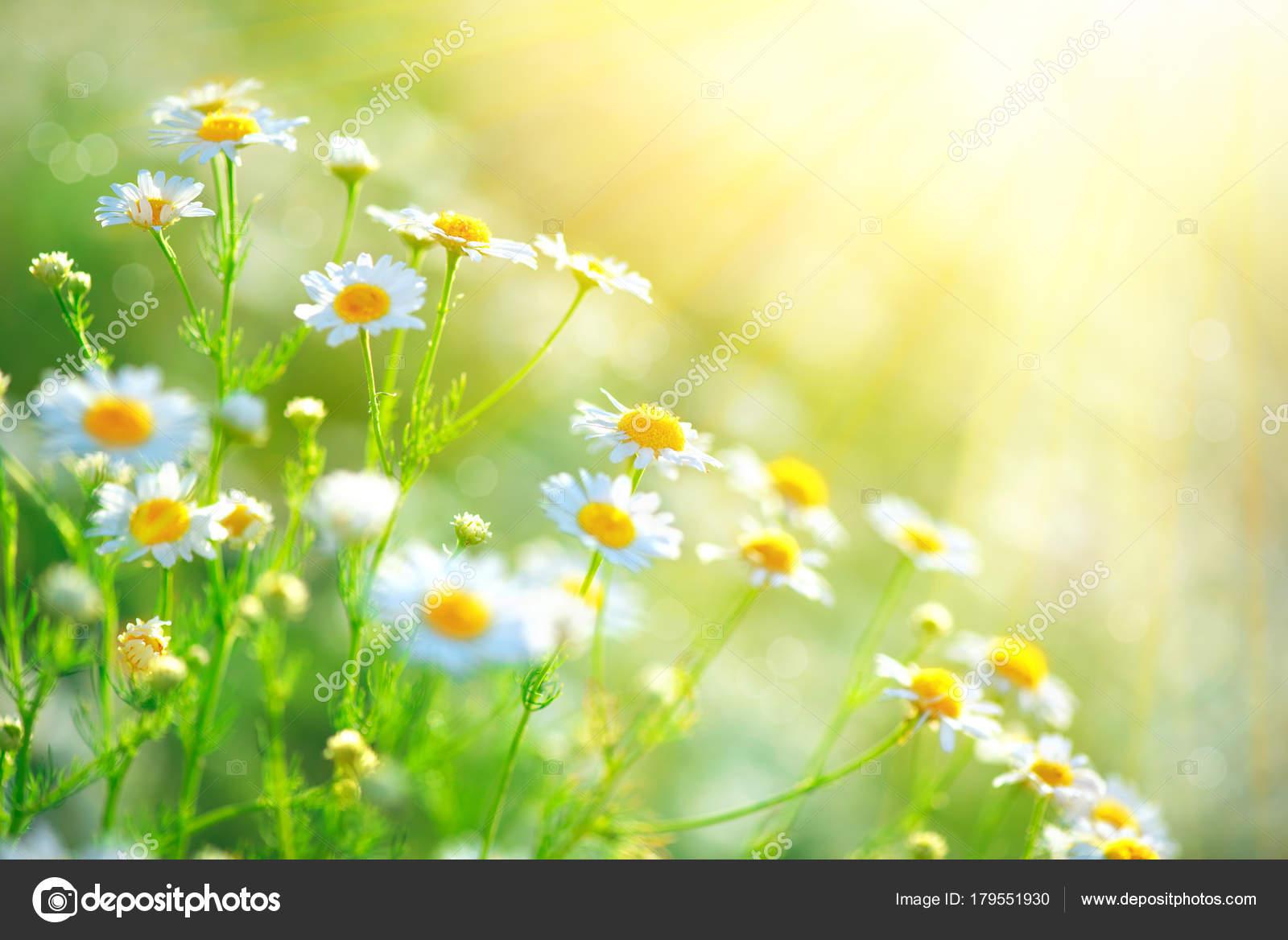 rayos de sol flores
