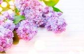 Parta fialovými květy na bílém prkna dřevěné pozadí