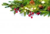 Weihnachtsbaum mit Zapfen Zweige isolierten auf weißen Hintergrund