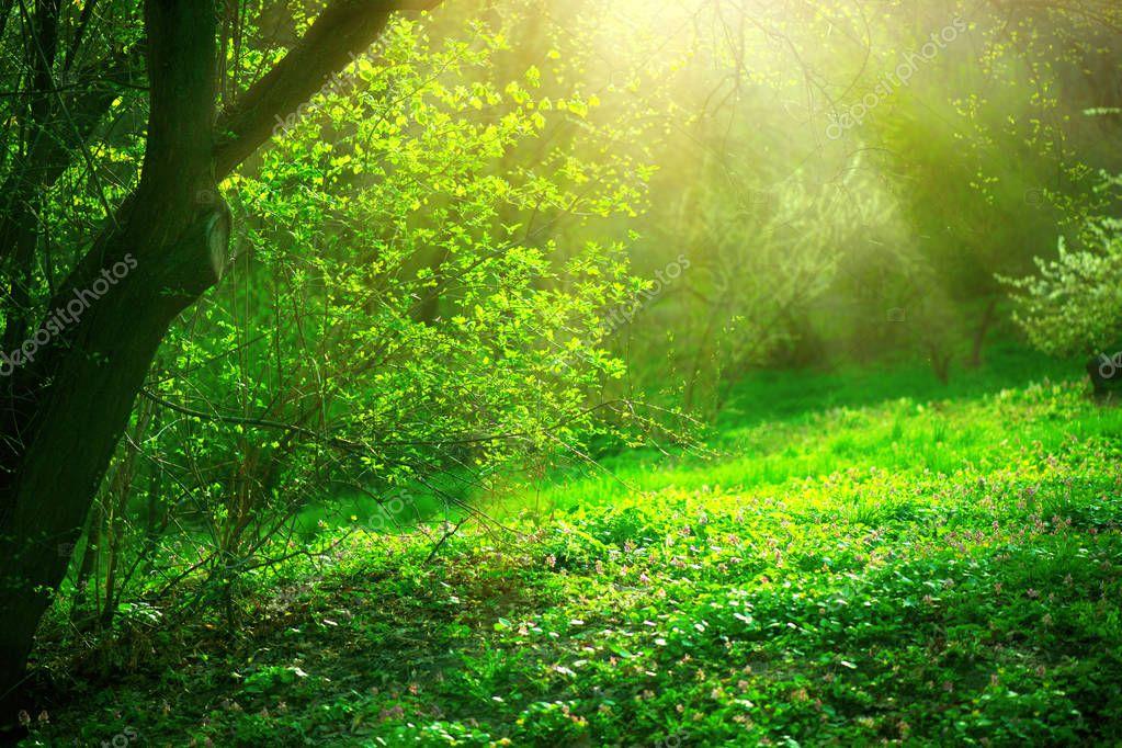 Фотообои Весенний парк с зеленой травой и деревьями в солнечный день