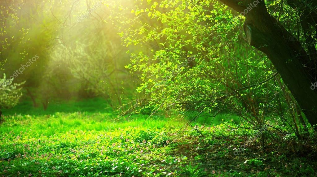 Фотообои Spring park with green grass and trees in sunny day