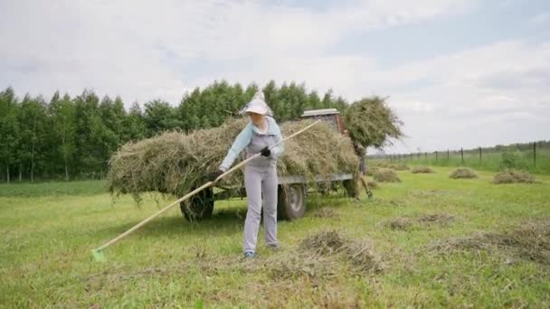 Hay on a personal plot. Harvesting hay for cattle.