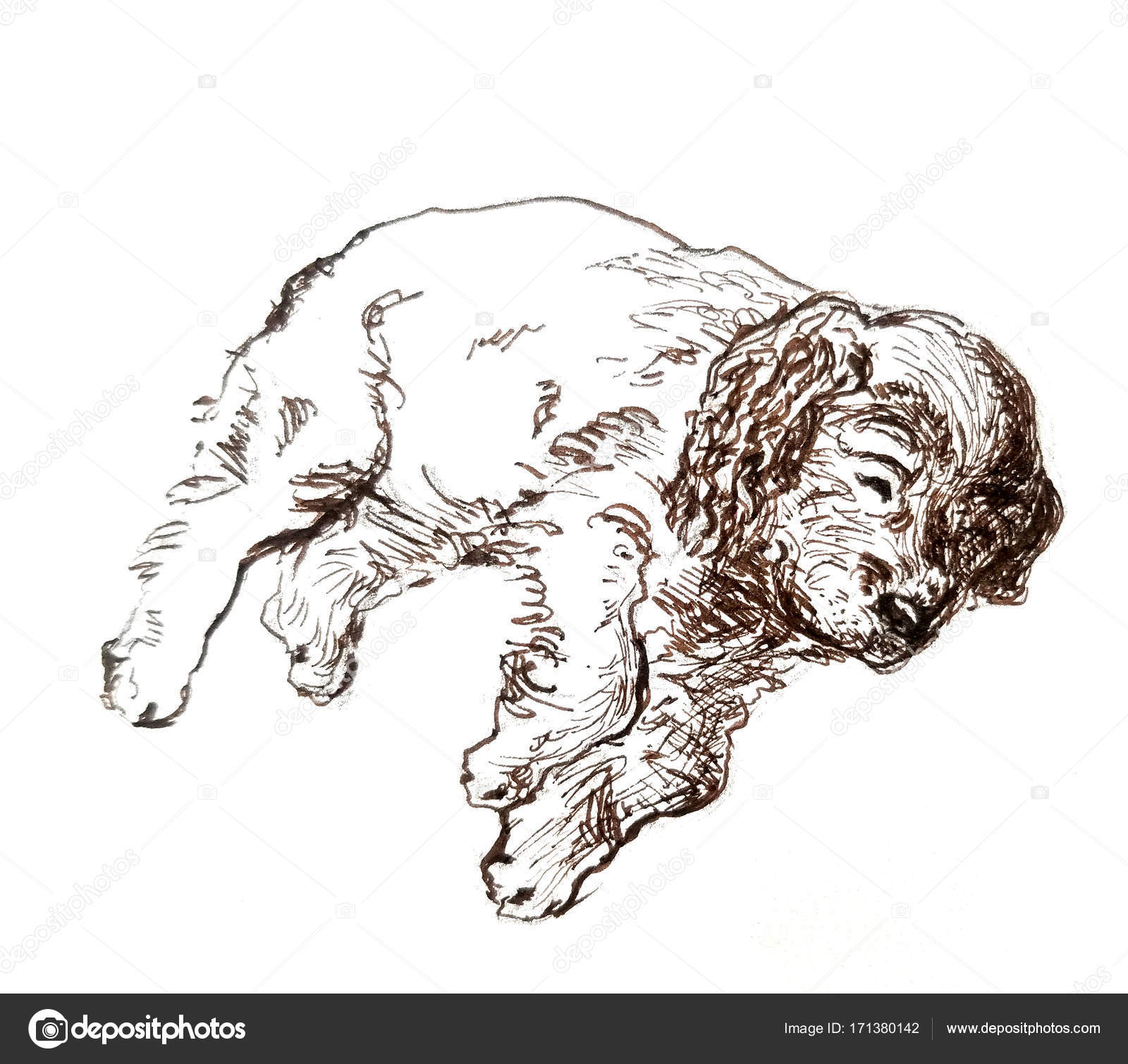 Cocker Spaniel Pencil Drawing Ink Drawing Of Spaniel Puppy Stock Vector C Bychovsky Gmail Com 171380142
