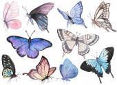 Kolekce ručně kreslených akvarelových motýlů