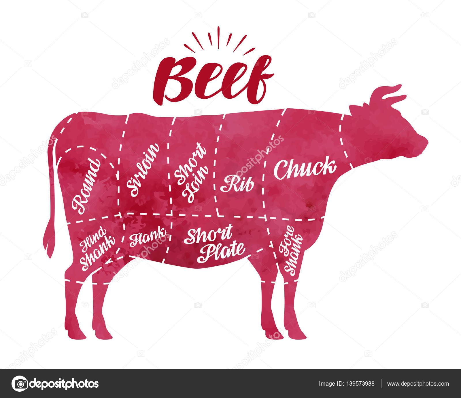 diagram cutting cow meat  butcher shop, bull, beef vector illustration–  stock illustration