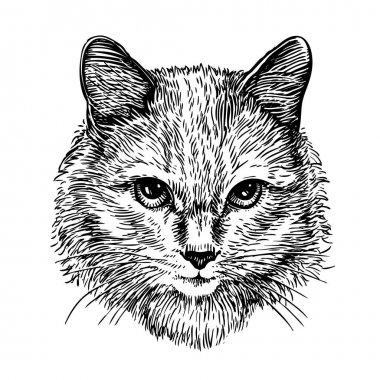 Hand drawn portrait of cute cat, sketch. Art vector illustration