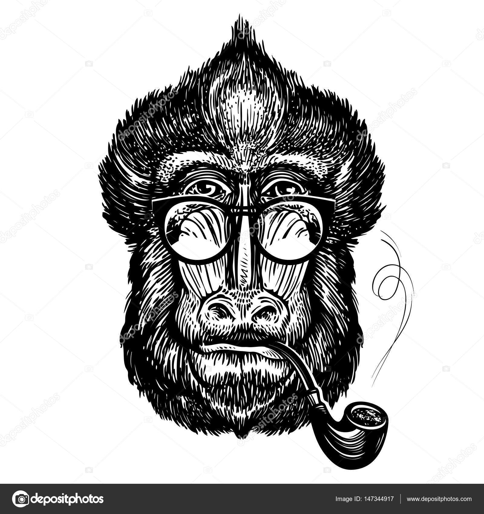 hand drawn portrait of funny monkey with glasses smart mandrill