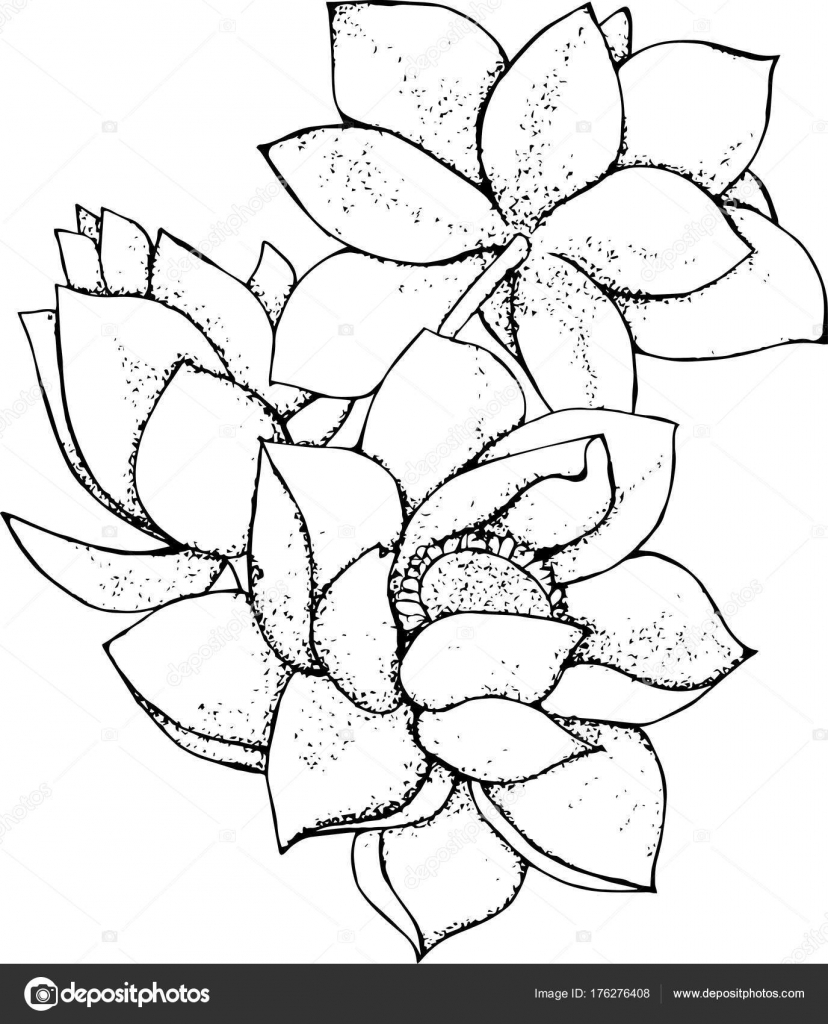 Illustration Of Lotus Flower In Style Black And White Lotus Pattern
