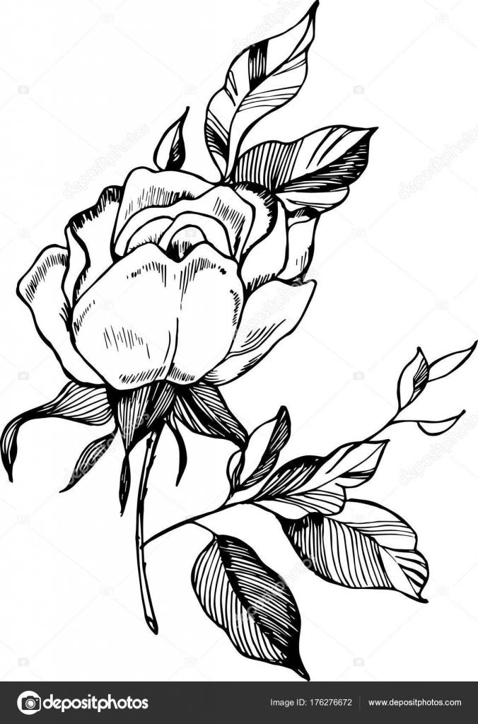 Illustration De Rose Noir Blanc Dessin D Une Usine Dans Le Style D