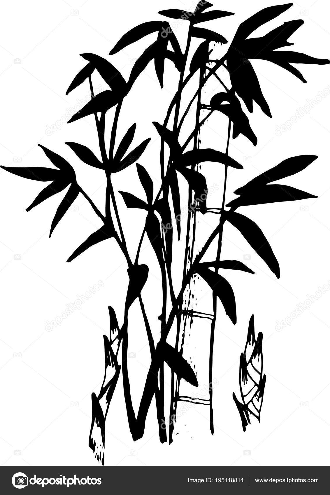Cernobile Ilustrace Bambus Tattoo Stock Vektor C Alexandracosmoss