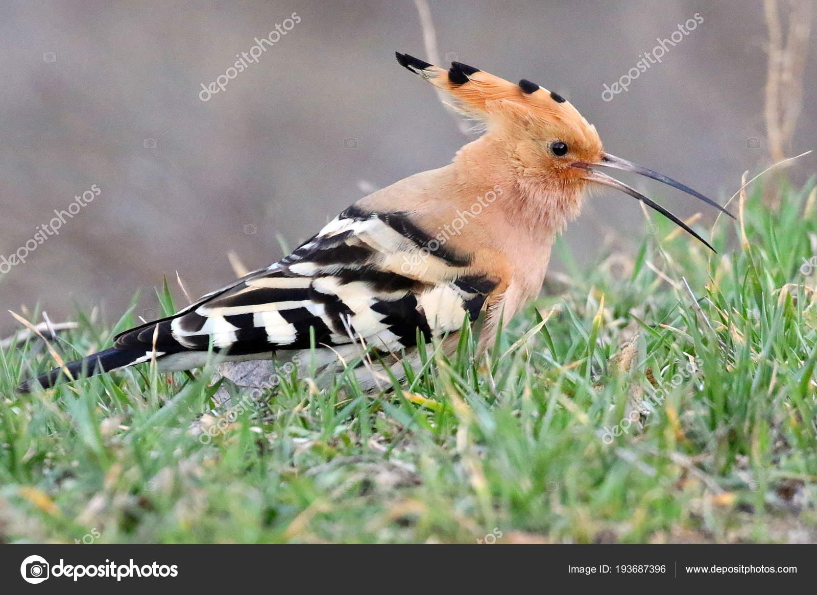 Βόλτα αυτό το μεγάλο πουλί