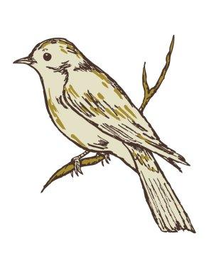 Grey bird on white