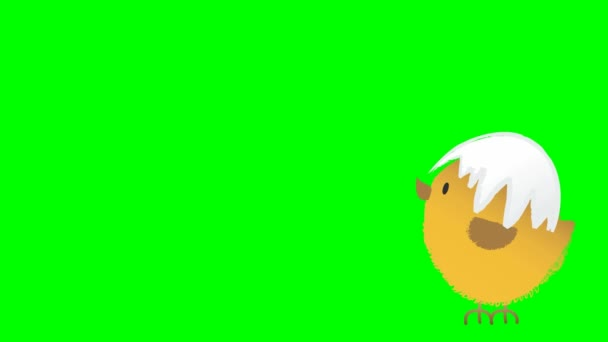 Animation of a jumping cute fluffy easter chicken with cracked egg shell on its had, animated hand drawn cartoon character, on chroma key green screen background.