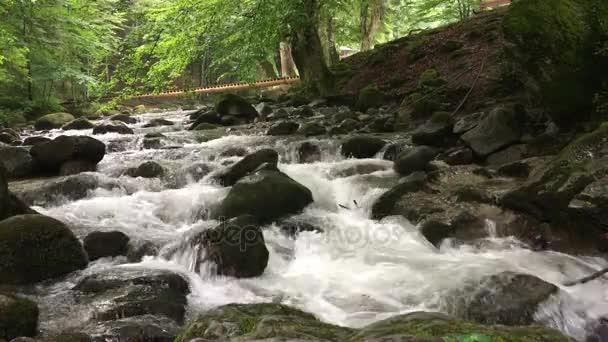 Horská řeka v zeleném lese