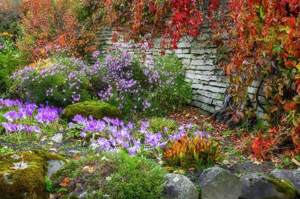 Parterre de fleurs dans la saison d\'automne. Plantes colorées et ...