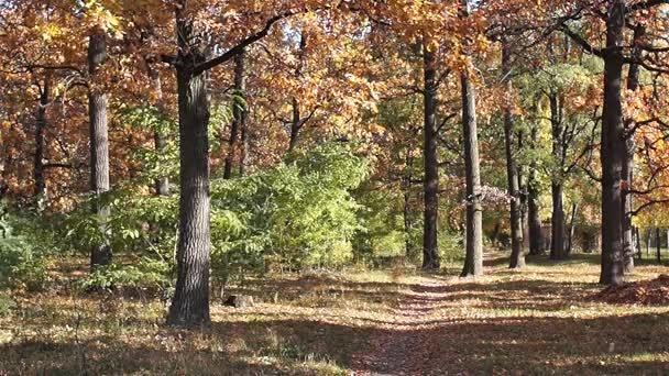 Őszi táj. Tölgy liget. Szép őszi. Lombhullás
