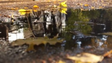 Reflection in a puddle. A bicyclist rides through a city street, reflected in a puddle. Bottom view.
