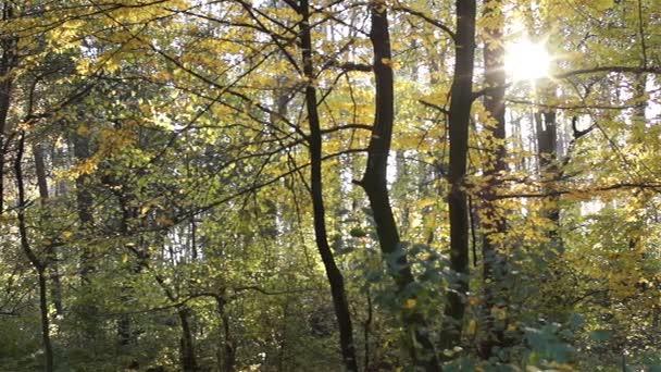 Podzimní večer. Krásná krajina. Slunce svítí skrz stromy.