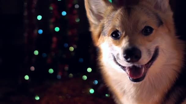 2018 rok psa. Šťastný nový rok a veselé Vánoce. Příjemné svátky