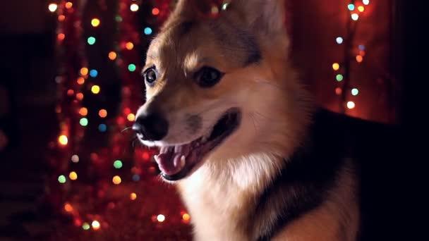 Rok 2018 pes šťastný nový rok a veselé Vánoce šťastný svátek