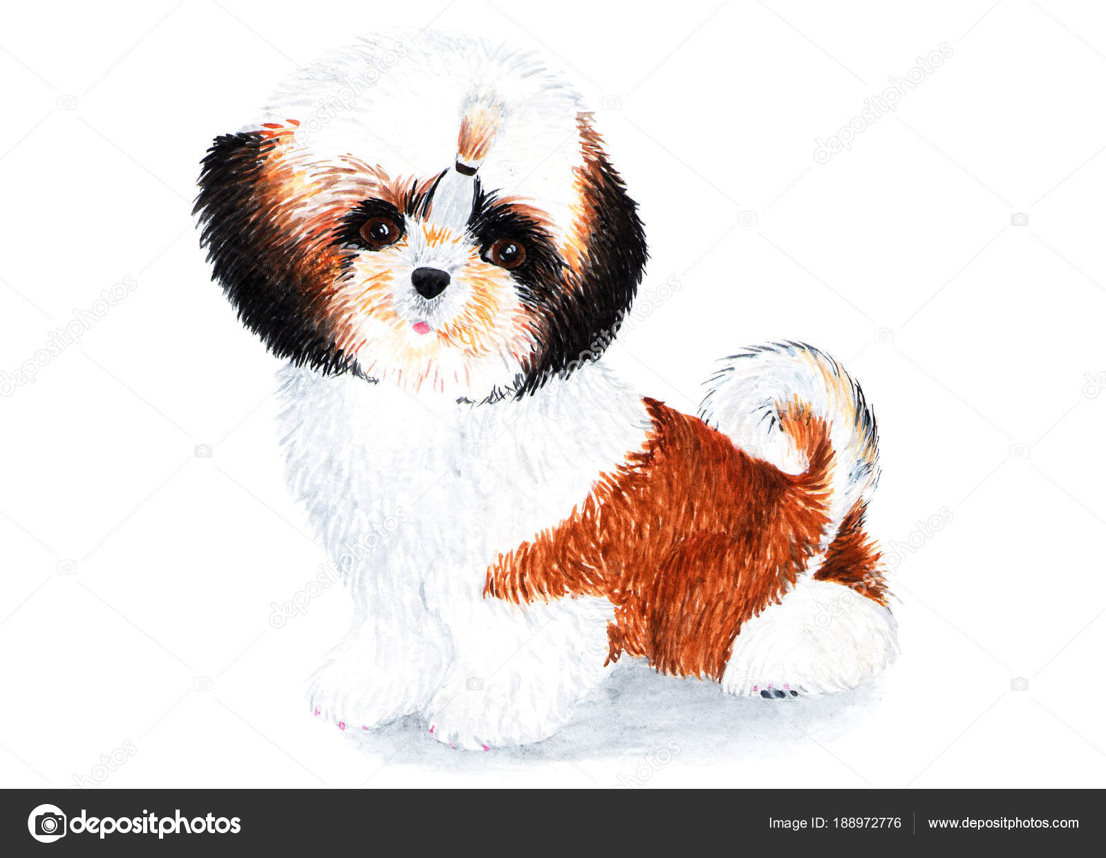 Puppy Shih Tzu Long Hair Watercolor Illustration Puppy Shih Tzu ...
