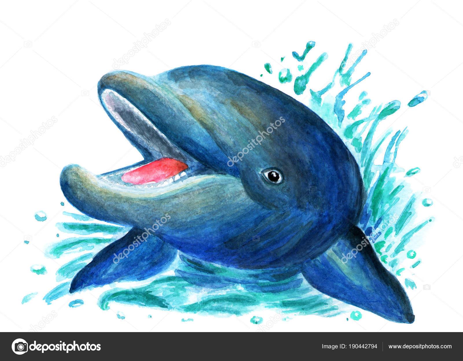 Dibujos Pintados Con Acuarelas Ilustración Delfín Pintado