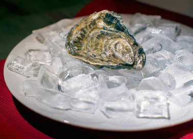 Close view of fresh oyster served on ice