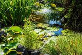Fotografie Teich mit Seerosen und Brunnen Plätschern