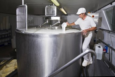 Cheesemaker pours rennet